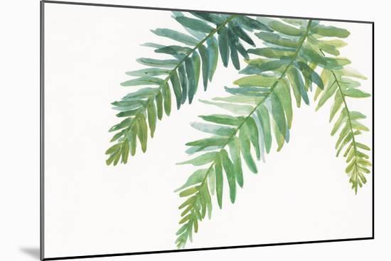 Ferns I Square-Chris Paschke-Mounted Premium Giclee Print