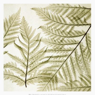 Ferns I-Steven N^ Meyers-Art Print
