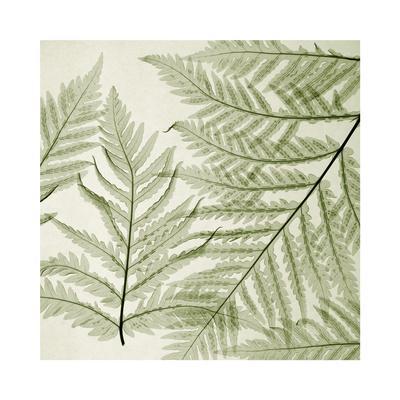https://imgc.artprintimages.com/img/print/ferns-i_u-l-f5m0z70.jpg?p=0