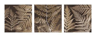 Ferns Mix II-Steven N^ Meyers-Giclee Print