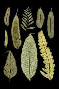 Ferns on Black II