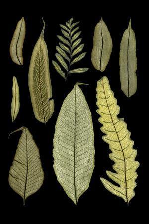 https://imgc.artprintimages.com/img/print/ferns-on-black-ii_u-l-q11aumz0.jpg?p=0