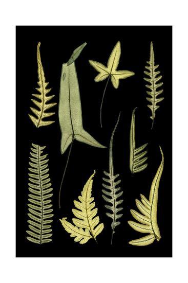 Ferns on Black IV--Art Print
