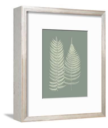Ferns on Sage IX-Vision Studio-Framed Art Print