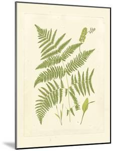 Ferns with Platemark I