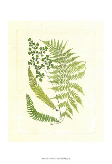 Ferns with Platemark III--Art Print