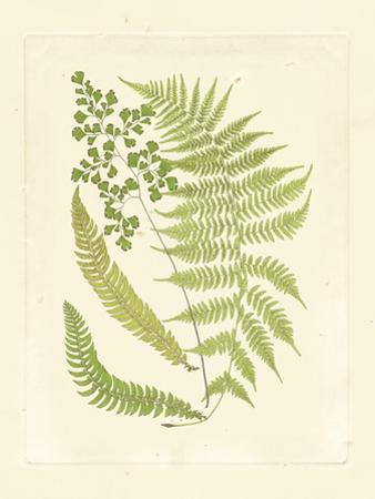 Ferns with Platemark III