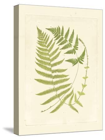 Ferns with Platemark V