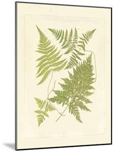 Ferns with Platemark VI