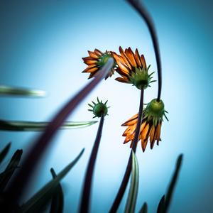 Flowerlove by Fgr100
