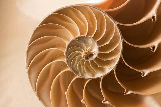 fibonacci-pattern-in-a-shell