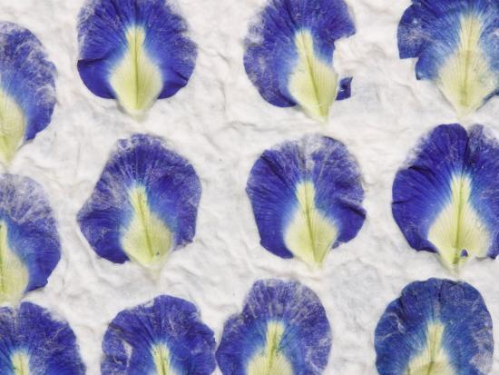 fibrous handmade paper with embedded flower petals