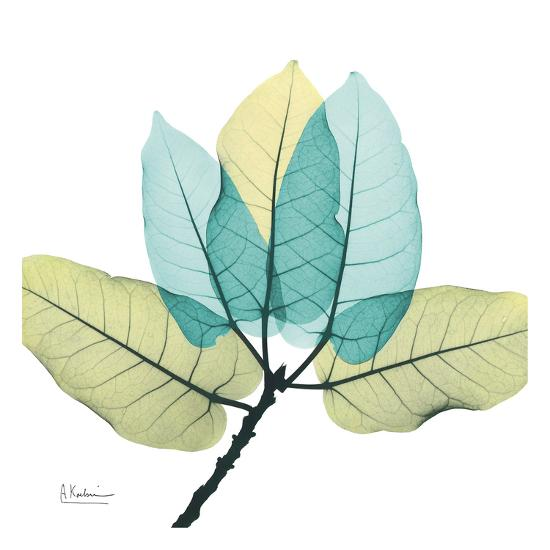 Ficus Burkey-Albert Koetsier-Art Print