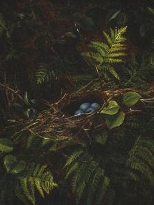 Bird's Nest and Ferns, 1863 by Fidelia Bridges