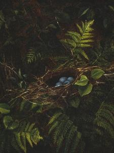 Bird's Nest and Ferns, 1863 by Fidelia Bridges