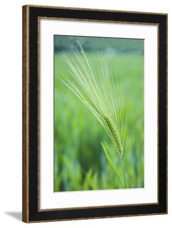 Field Crop Grass Detail-Veneratio-Framed Photographic Print