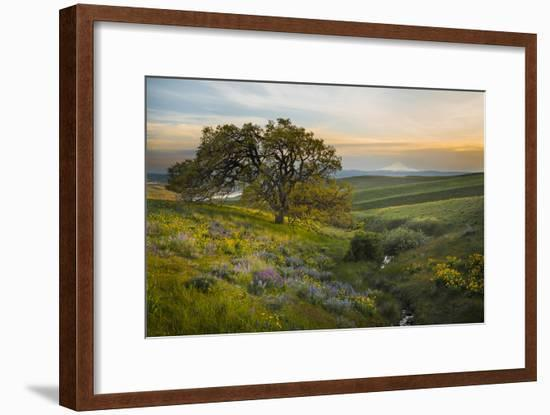 Field of Arrowleaf Balsamroot, Lupine and an Oak Tree at Columbia Hills State Park, Mt. Hood-Gary Luhm-Framed Photographic Print