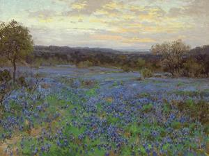 Field of Bluebonnets at Sunset