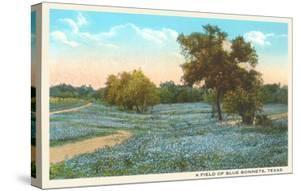 Field of Bluebonnets, Texas