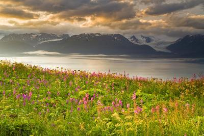 Field of Fireweed on Hill Overlooking Kachemak Bay and Grewingk Glacier-Design Pics Inc-Photographic Print