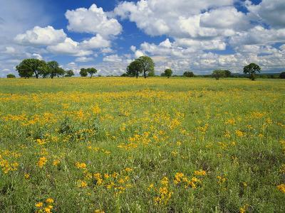 Field of Flowers and Trees with Cloudy Sky, Texas Hill Country, Texas, USA-Adam Jones-Photographic Print