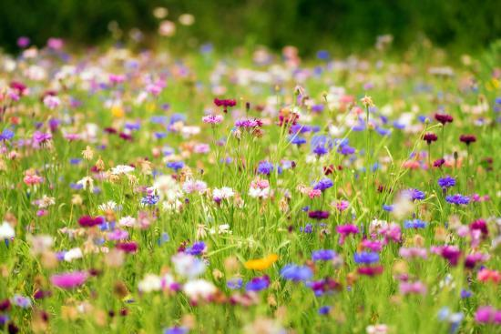 Field of Flowers in Paintography-Philippe Sainte-Laudy-Photographic Print