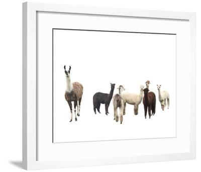 Field of Friends-Bill Philip-Framed Giclee Print