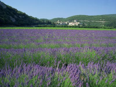 Field of Lavender and Village of Montclus in Distance, Gard, Languedoc-Roussillon, France, Europe-Tomlinson Ruth-Photographic Print