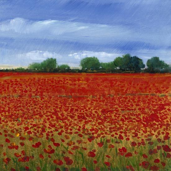 Field of Poppies II-Tim OToole-Art Print