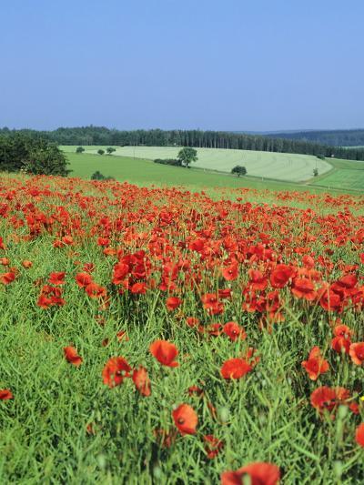 Field of Poppies, Neresheim, Swabian Alb, Baden Wurttemberg, Germany, Europe-Markus Lange-Photographic Print