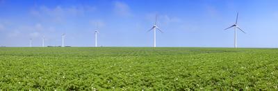 Field of Potatoes in Bloom with Wind Turbines, Thil-Manneville, Saint-Valery-En-Caux