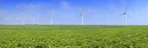 Field of Potatoes in Bloom with Wind Turbines, Thil-Manneville, Saint-Valery-En-Caux