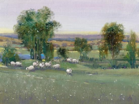 Field of Sheep II-Tim O'toole-Art Print