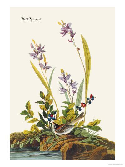 Field Sparrow-John James Audubon-Art Print