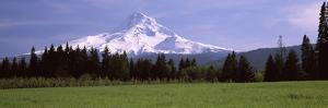 Field with a Snowcapped Mountain in the Background, Mt Hood, Oregon, USA