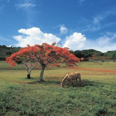 https://imgc.artprintimages.com/img/print/field-with-flowering-trees-and-a-horse-with-blue-sky_u-l-q10x3630.jpg?p=0