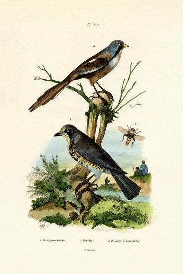 Fieldfare, 1833-39--Giclee Print