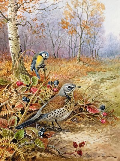 Fieldfare and Blue Tit-Carl Donner-Giclee Print