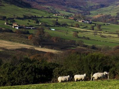 Fields and Farm, North York Moors National Park-Doug McKinlay-Photographic Print