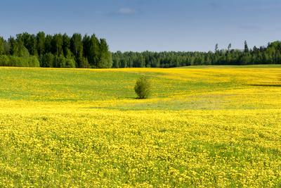Fields at Varska, Estonia, Baltic States-Nico Tondini-Photographic Print
