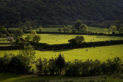 Fields Near Buttermere in the Lake District-Alex Treadway-Photographic Print