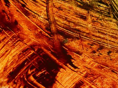 Fiery Orange Paintbrush Strokes--Photographic Print