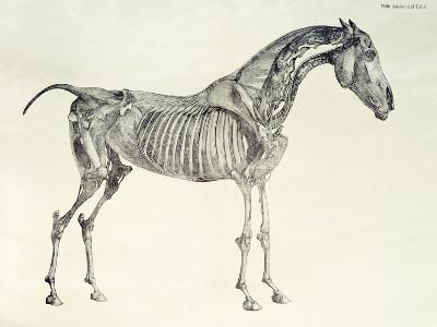 Fifth Anatomical Table, from The Anatomy of the Horse-George Stubbs-Giclee Print