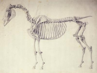 Fifth Anatomical Table, from 'The Anatomy of the Horse'-George Stubbs-Giclee Print