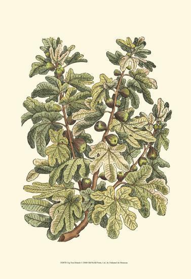 Fig Tree Branch-Henri Du Monceau-Art Print