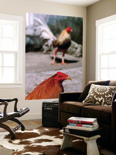 Fighting Cocks-Alfredo Maiquez-Giant Art Print