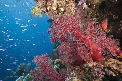 Fiji Coral Reef-Reinhard Dirscherl-Photographic Print