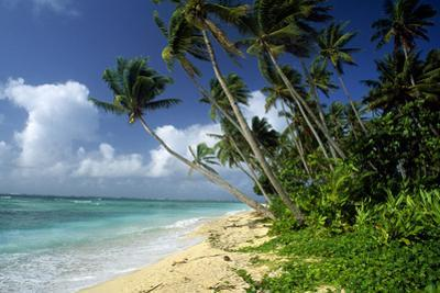 Fiji One of the Best Shelling Beaches in the World