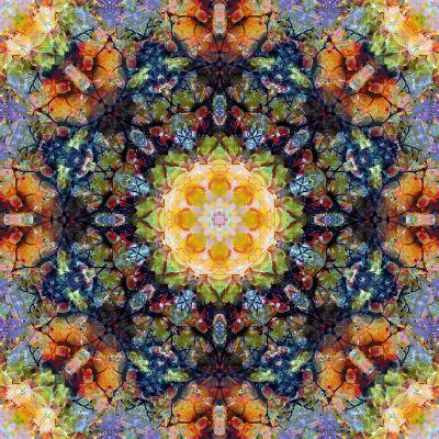 Filigree Shining Mandala Ornament from Flower Photographs, Conceptual Layer Work-Alaya Gadeh-Photographic Print