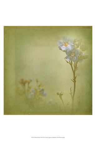 https://imgc.artprintimages.com/img/print/filtered-dreams-viii_u-l-f6fhux0.jpg?p=0